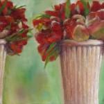 dubbele tulpen