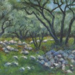 olijven boomgaard met    keien  in  Spanje